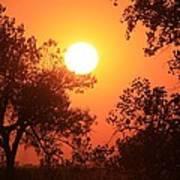Kansas Golden Sunset With Trees Art Print by Robert D  Brozek