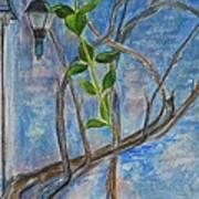 Kathy's Wall And Vine Art Print
