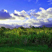 Kauai Grass Art Print