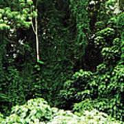 Kauai Trees Art Print