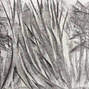 Kauri Giant Art Print