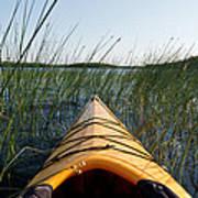 Kayaking Through Reeds Bwca Art Print