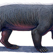 Kayentatherium, A Mammal-like Art Print
