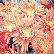 Keepsake Chrysanthemum  Art Print