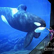 Keiko The Killer Whale Oregon Coast Aquarium Pat Hathaway Photo  1996 Art Print
