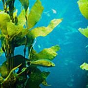 Kelp One Art Print