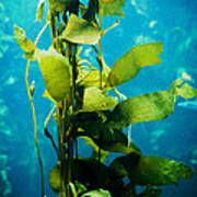 Kelp Two Art Print