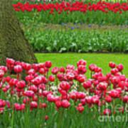 Keukenhof Gardens 91 Art Print