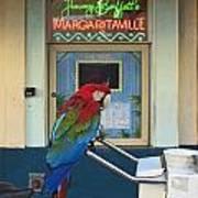 Key West - Parrot Taking A Break At Margaritaville Art Print