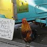 Key West - Rooster Making A Living Art Print