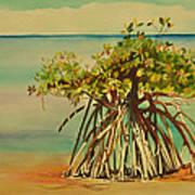Keys Mangrove Art Print
