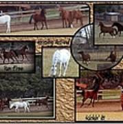 Horses Kickin It  Art Print