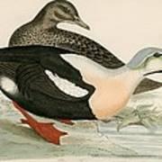 King Duck Art Print