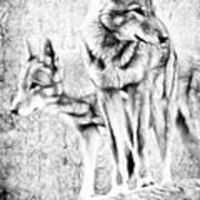 Alpha Male Black And White Art Print