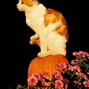 King Of The Pumpkin Art Print