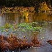 Kintbury Newt Ponds Art Print