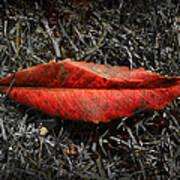 Kiss Of Leaf Art Print