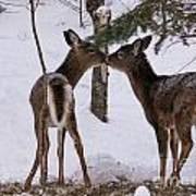 Kissing Deer Art Print
