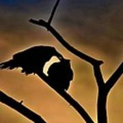 Kissing Ravens Art Print