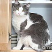 Kitchen Cubbard Cat Art Print