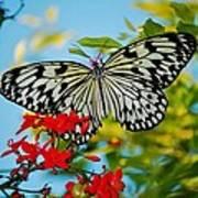 Kite Butterfly Art Print