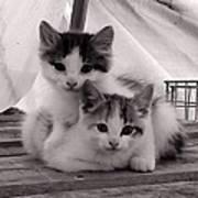 Kitten Cuddles Art Print
