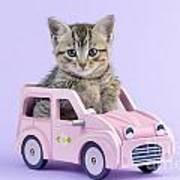 Kitten In Pink Car  Art Print by Greg Cuddiford