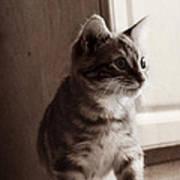 Kitten In The Light Art Print
