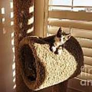 Kitten Peeks Through Hole In Condo Art Print