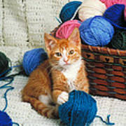Kitten Playing With Yarn Art Print