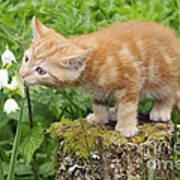 Kitten With Flowers Art Print