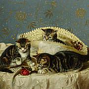 Kittens Up To Mischief Art Print