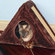 Kitty A-frame Art Print