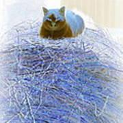 Kitty Blue IIi Art Print
