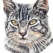 Kitty Kat Iphone Cases Smart Phones Cells And Mobile Cases Carole Spandau Cbs Art 337 Art Print