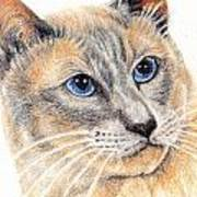 Kitty Kat Iphone Cases Smart Phones Cells And Mobile Cases Carole Spandau Cbs Art 346 Art Print