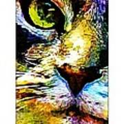 Kitty Nosed Art Print