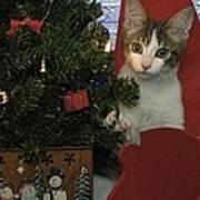 Kitty Says Happy Holidays Art Print