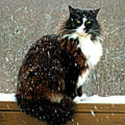 Kittycat In The Snow On The Fence Art Print