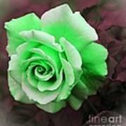 Kiwi Lime Rose Art Print