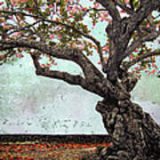 Knotted Tree Art Print