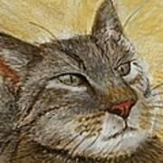 Knowing Look Of Wisdom Art Print