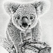 Koala Oxley Twinkles Art Print