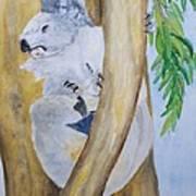 Koala Still Life Art Print