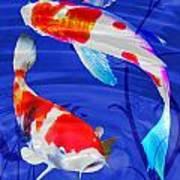 Kohaku Koi In Deep Blue Pool Art Print