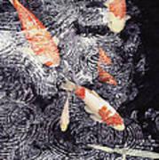 Koi In The Rain Art Print