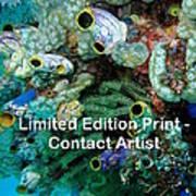 Komodo Island 5 Art Print