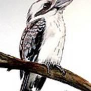 Kookaburra 5 Art Print
