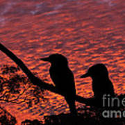 Kookaburras At Sunset Art Print