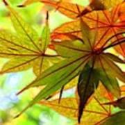 Kyoto's Beauty Of Autumn Art Print